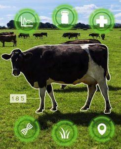 Das Foto einer Kuh, auf dem sich rund um das Tier Symbole befinden, hinter denen sich bestimmte Daten befinden.