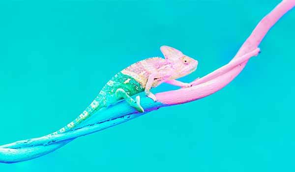 Ein gut getarntes Reptil.