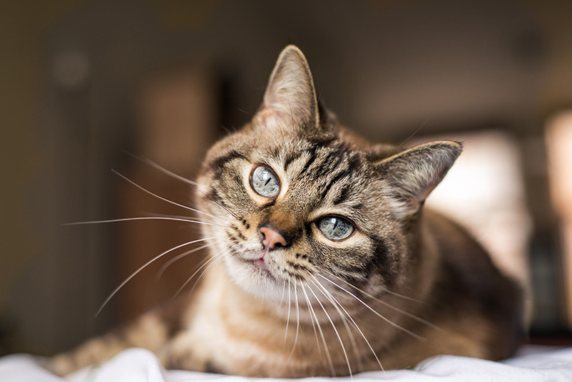 A picture of a cat.