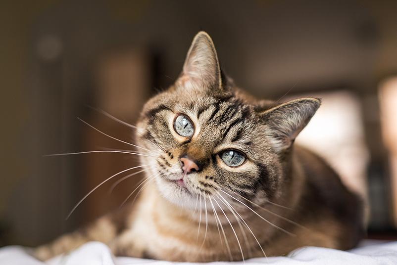 Ein Bild von einer Katze.