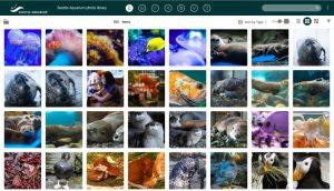 Das öffentliche Portal des Seattle Aquarium im DAM-System von Canto.