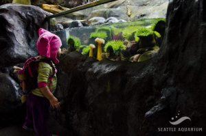 Ein Bild eines staunenden Kindes neben einem Becken des Seattle Aquariums.