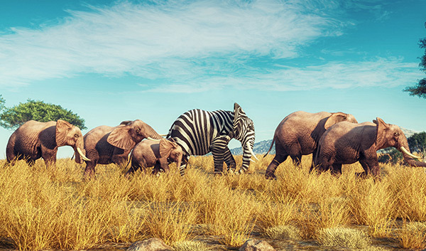 A group of elephants with a striped elephant in the middle of the pack.