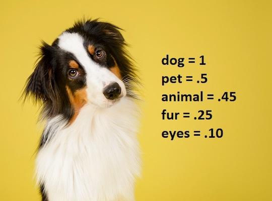 Das Bild eines Hundes mit Schlagworten, die nach bestimmten Kriterien gewichtet und angeordnet sind.