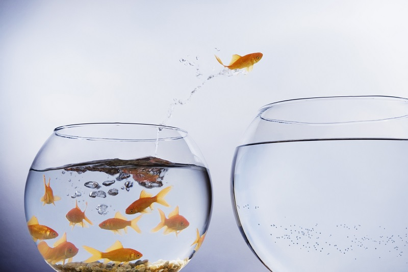 A goldfish jumping to a new bowl.