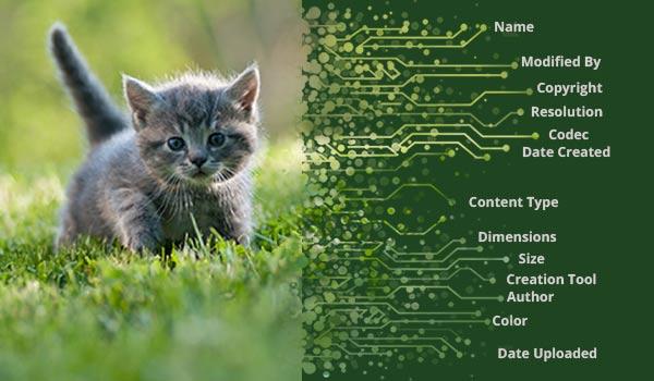 Ein Bild von einer Katze mit Daten am Rand.