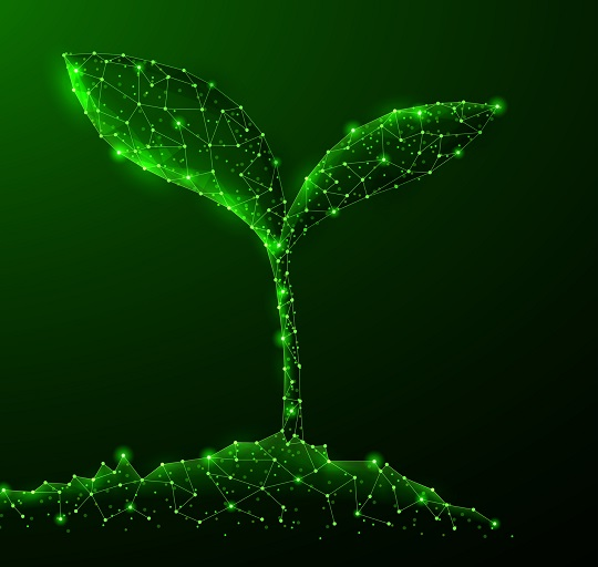 A green plant sprouting digitally.