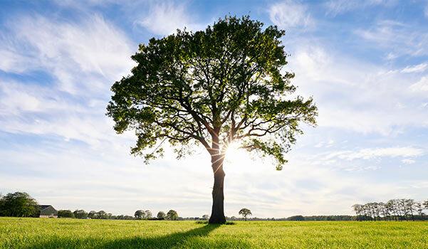 A tree in an open field.