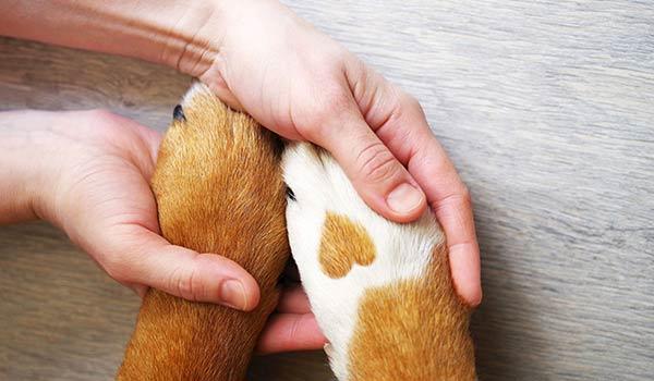 Ein Mensch hält die Pfoten eines Tieres in den Händen.