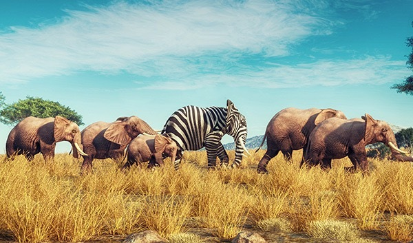 Eine Gruppe von Elefanten mit einem gestreiften Elefanten in der Mitte, ein Beispiel für gute Markenpositionierung.