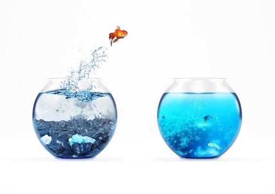 Ein Fisch springt von einem Aquarium in ein anderes, symbolisiert wie Sie CR2 in TIFF konvertieren können.