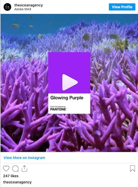 Instagram Post by the Ocean Agency