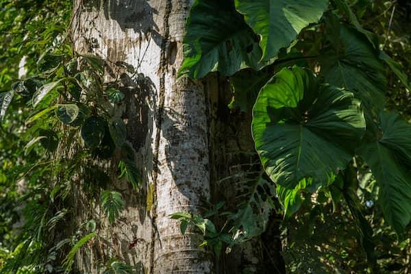 Foto eines gesunden Baumes in einem Wald.
